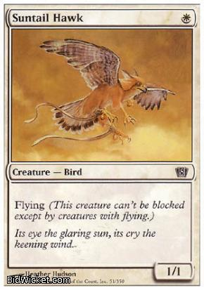 Suntail Hawk, 8th Edition, Magic the Gathering