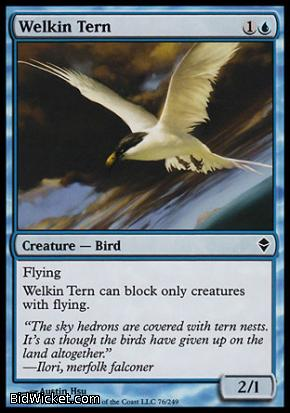 Welkin Tern, Zendikar, Magic the Gathering